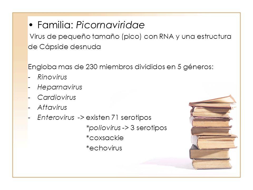 Familia: Picornaviridae