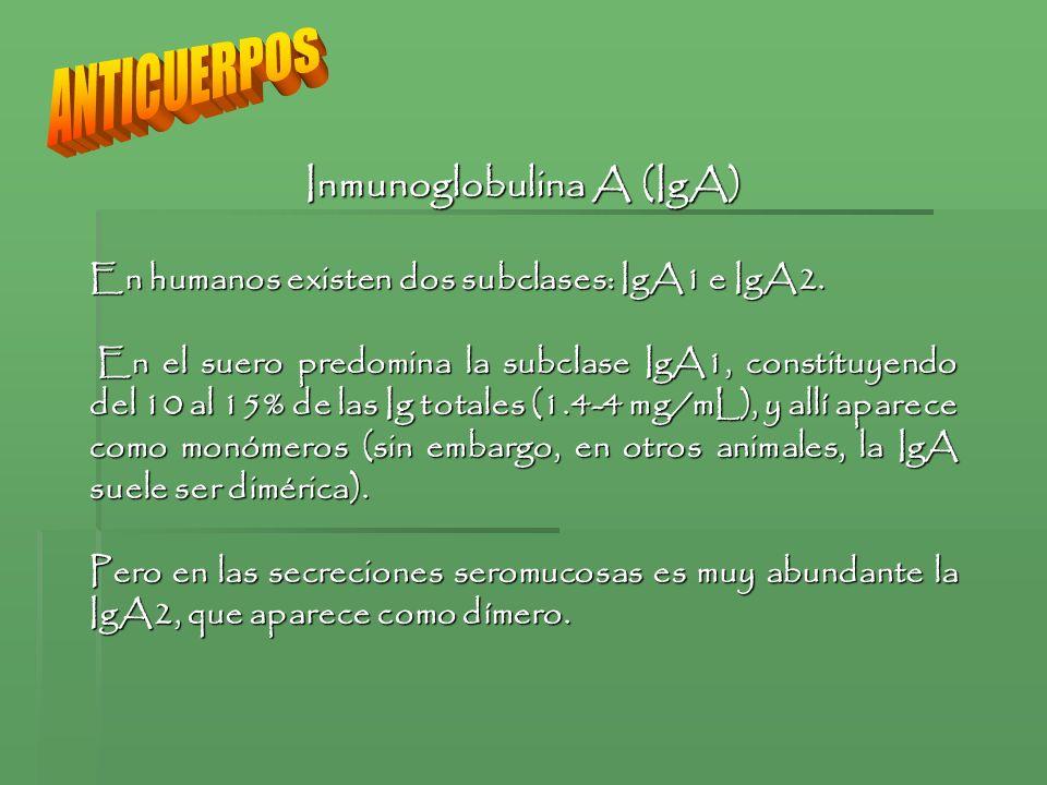 Inmunoglobulina A (IgA)