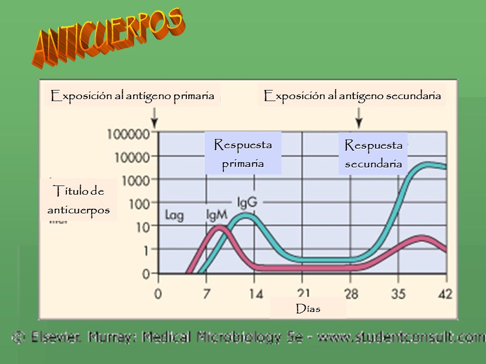 Exposición al antígeno primaria Exposición al antígeno secundaria