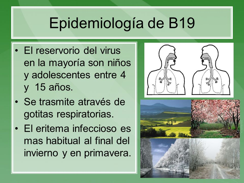 Epidemiología de B19 El reservorio del virus en la mayoría son niños y adolescentes entre 4 y 15 años.