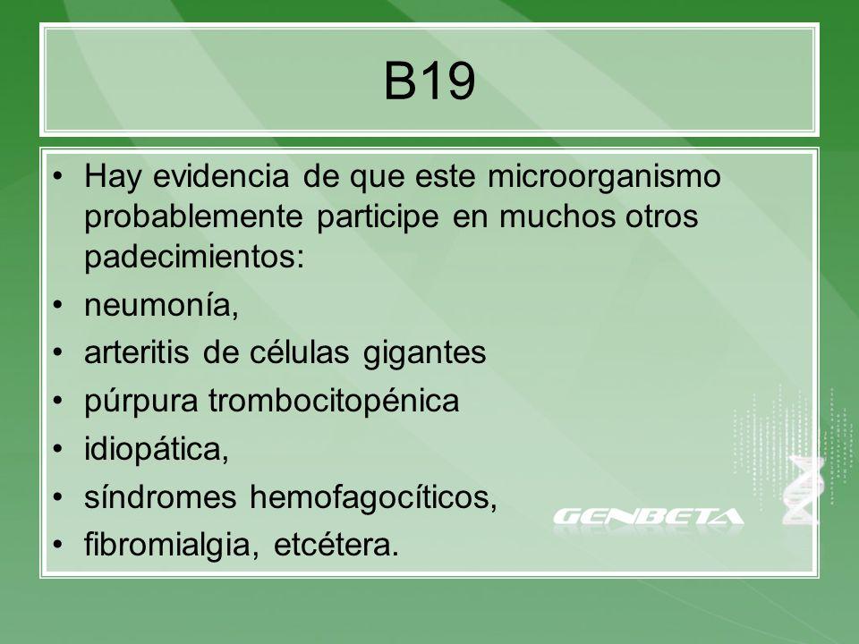 B19Hay evidencia de que este microorganismo probablemente participe en muchos otros padecimientos: neumonía,