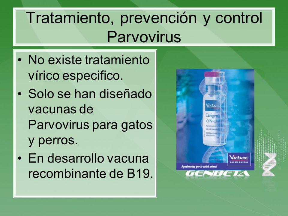 Tratamiento, prevención y control Parvovirus