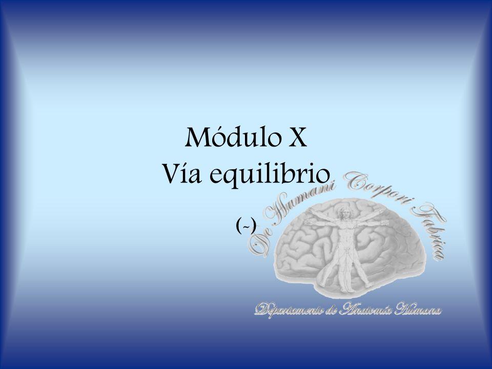 Módulo X Vía equilibrio