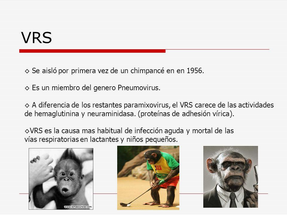 VRS ◊ Se aisló por primera vez de un chimpancé en en 1956.