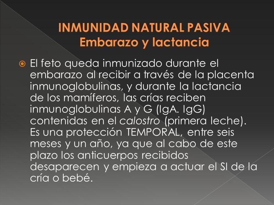 INMUNIDAD NATURAL PASIVA Embarazo y lactancia