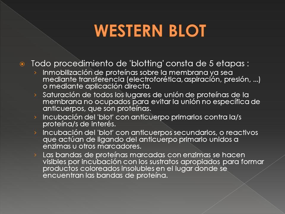 WESTERN BLOT Todo procedimiento de blotting consta de 5 etapas :