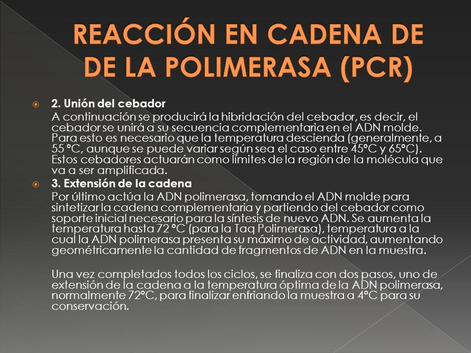 REACCIÓN EN CADENA DE DE LA POLIMERASA (PCR)
