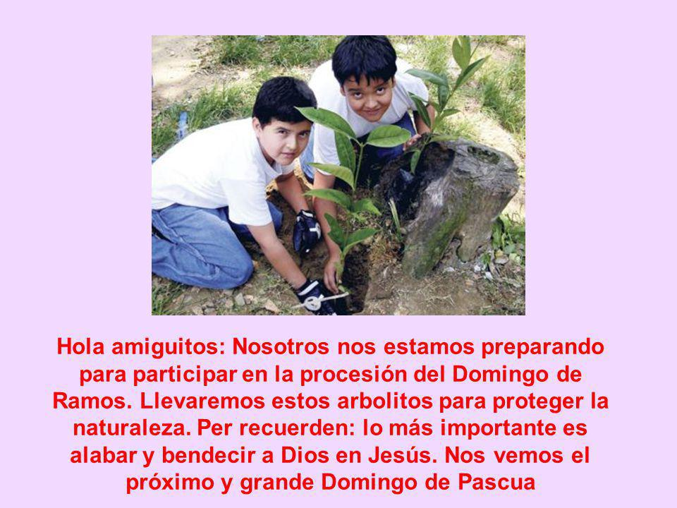 Hola amiguitos: Nosotros nos estamos preparando para participar en la procesión del Domingo de Ramos.
