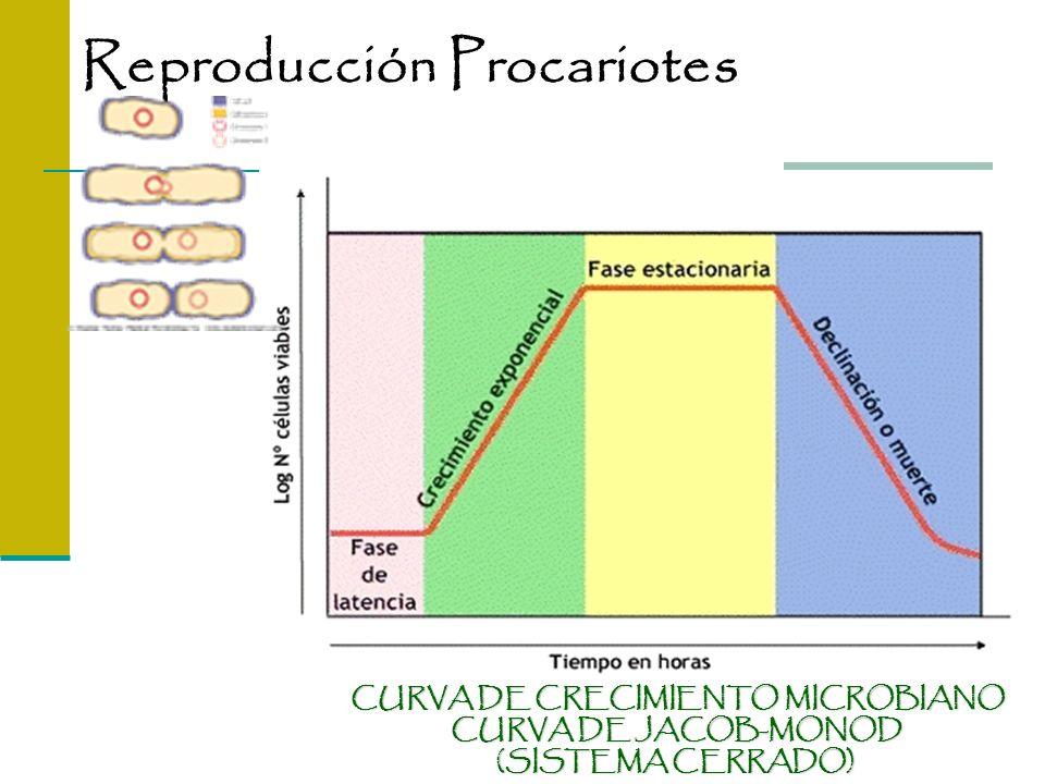 CURVA DE CRECIMIENTO MICROBIANO