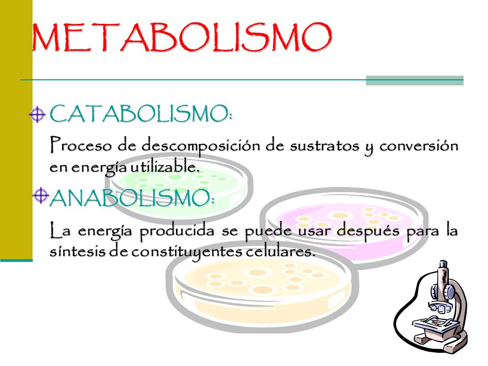 METABOLISMO CATABOLISMO: