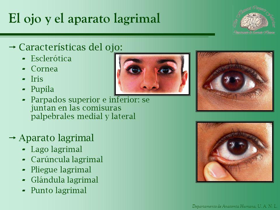 El ojo y el aparato lagrimal