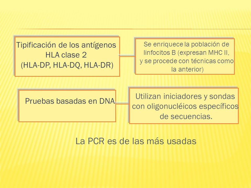 Tipificación de los antígenos HLA clase 2 (HLA-DP, HLA-DQ, HLA-DR)