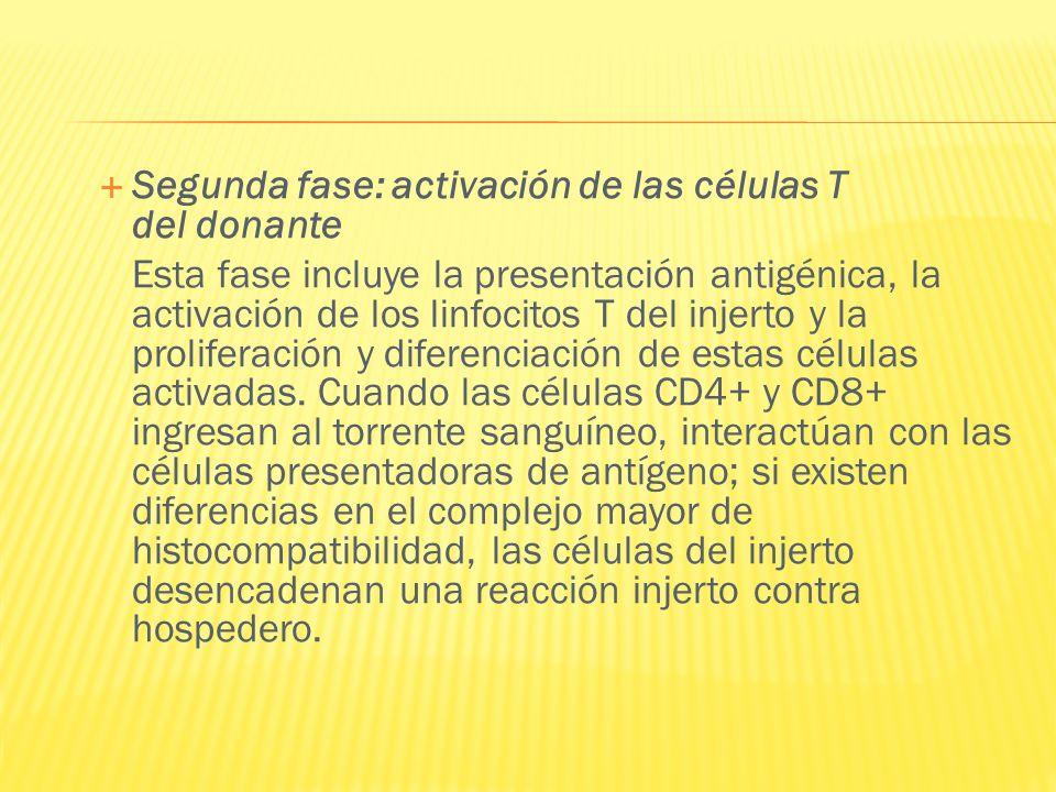 Segunda fase: activación de las células T del donante