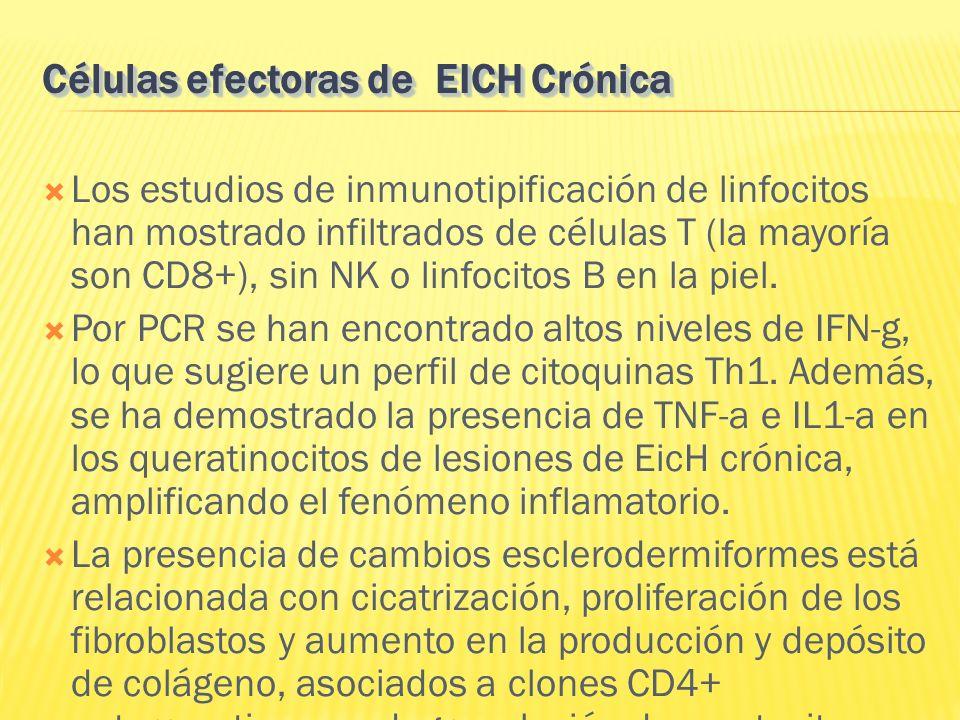 Células efectoras de EICH Crónica