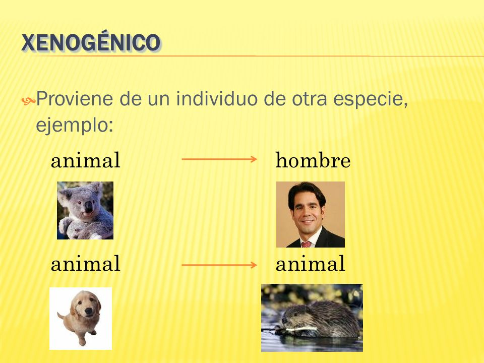 XENOGÉNICO Proviene de un individuo de otra especie, ejemplo: