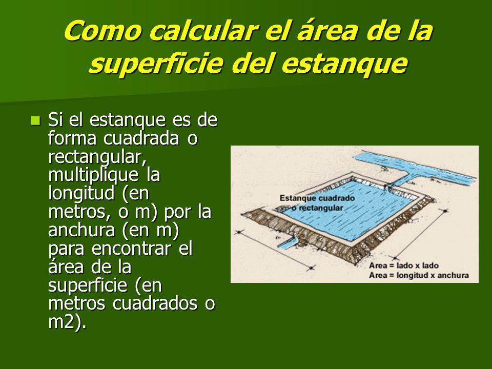 Como calcular el área de la superficie del estanque