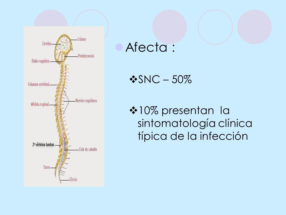 Afecta : SNC – 50% 10% presentan la sintomatología clínica típica de la infección