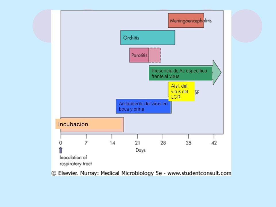 Incubación Presencia de Ac especifico frente al virus