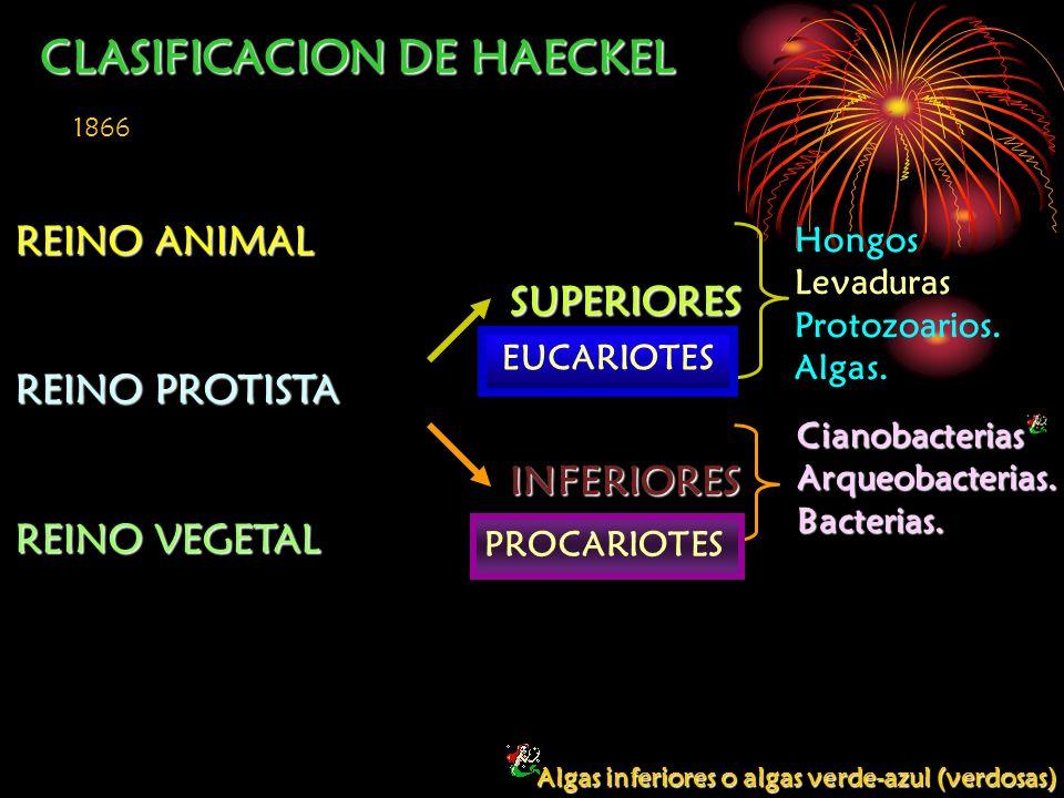 CLASIFICACION DE HAECKEL