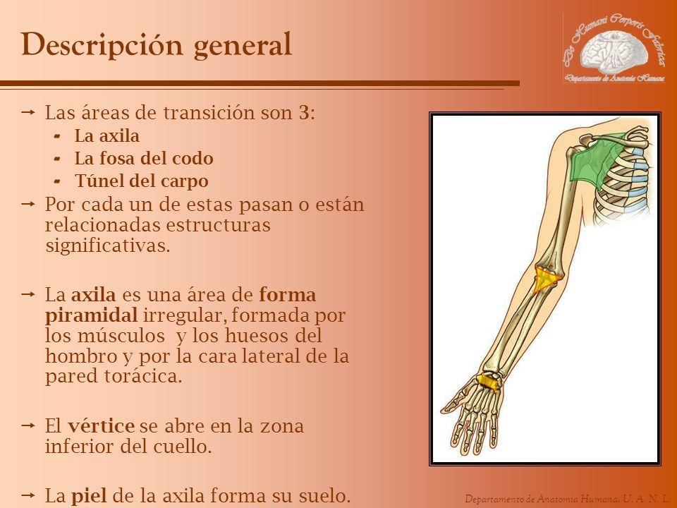 Descripción general Las áreas de transición son 3:
