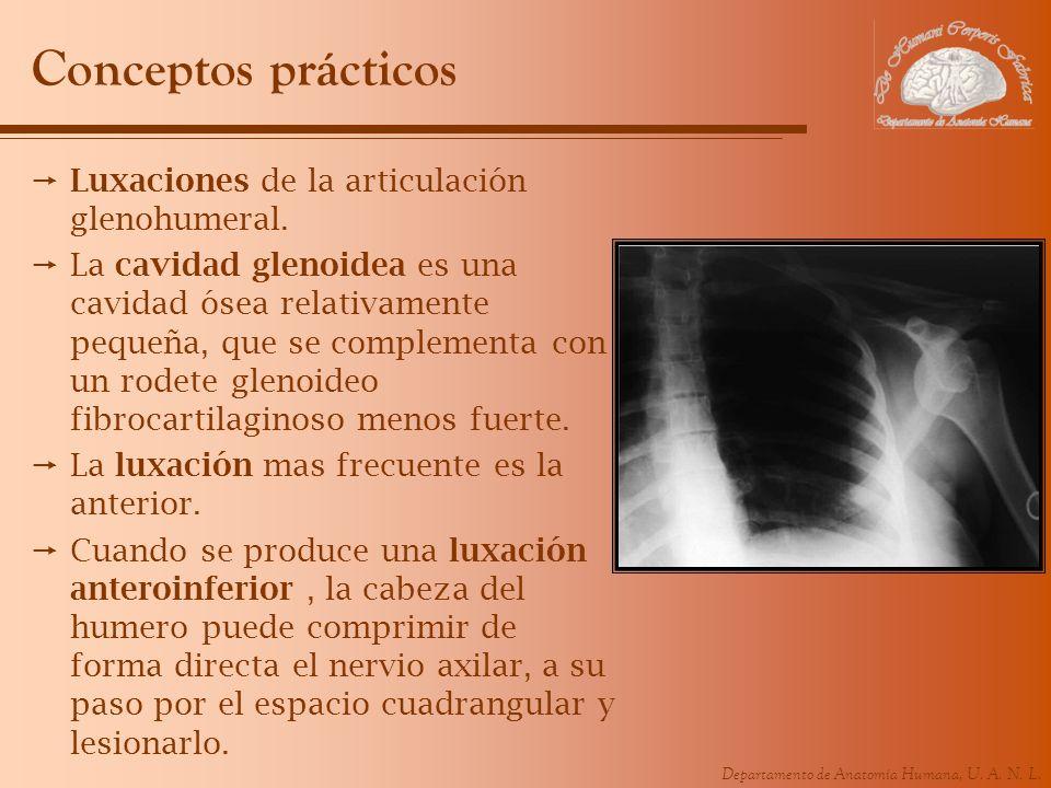 Conceptos prácticos Luxaciones de la articulación glenohumeral.