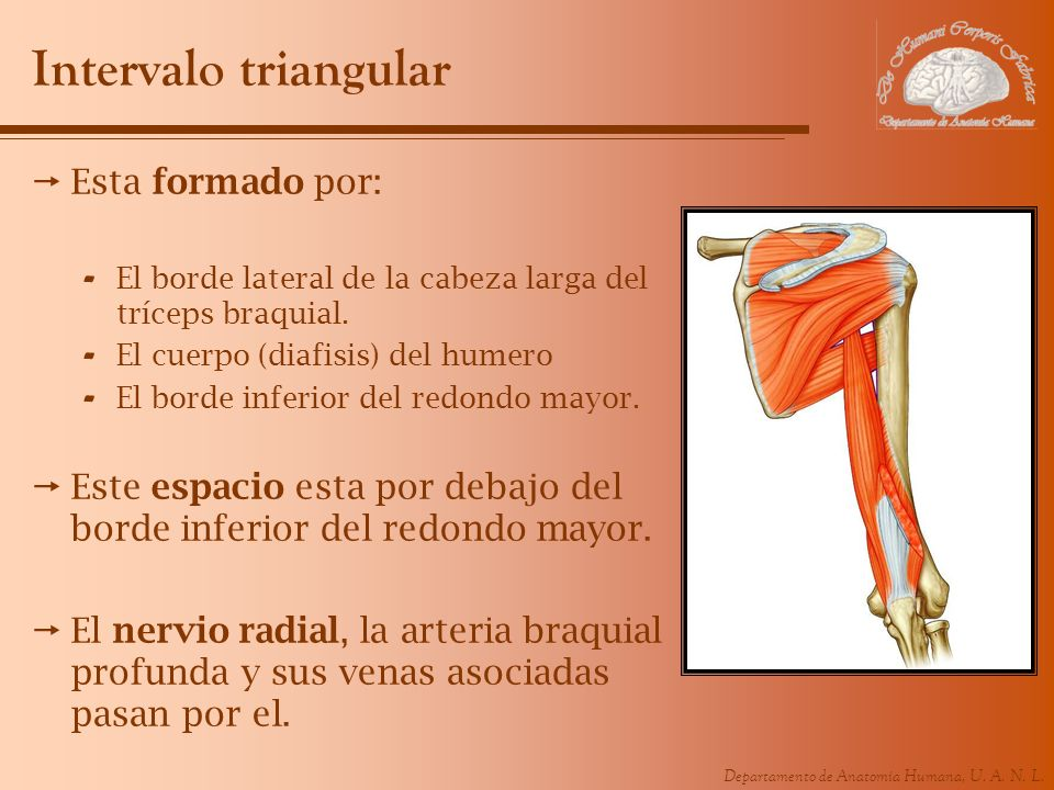 Intervalo triangular Esta formado por: