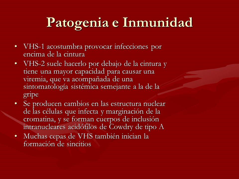 Patogenia e Inmunidad VHS-1 acostumbra provocar infecciones por encima de la cintura.