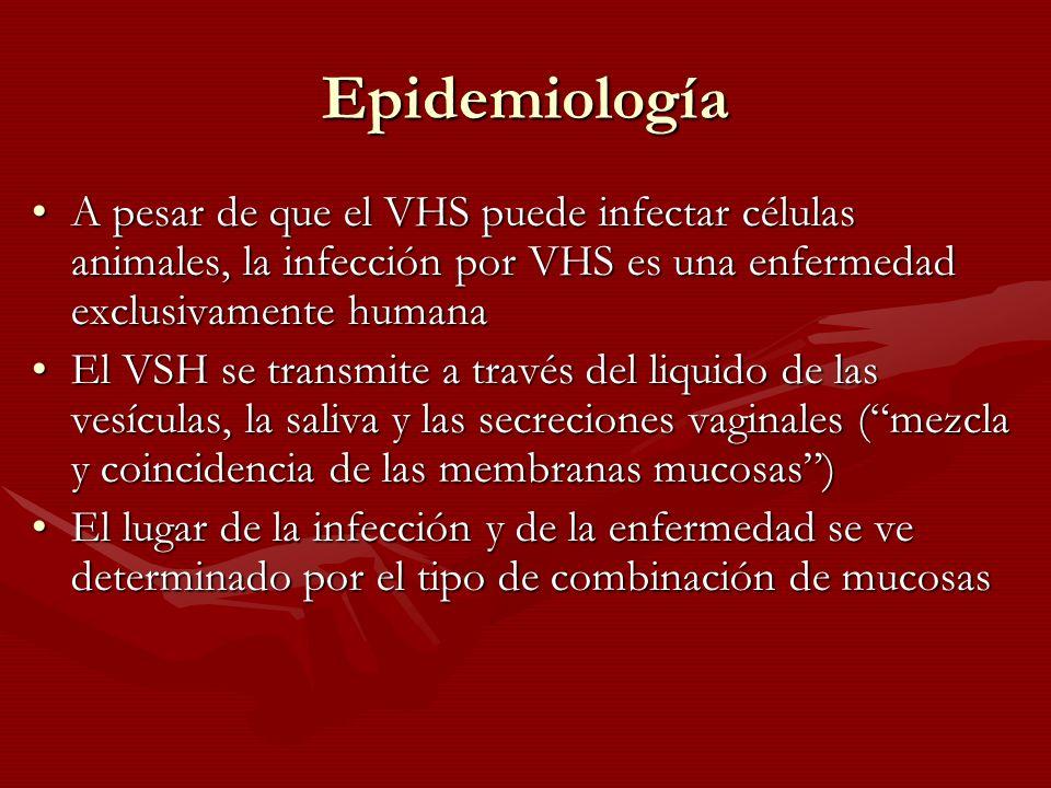 Epidemiología A pesar de que el VHS puede infectar células animales, la infección por VHS es una enfermedad exclusivamente humana.