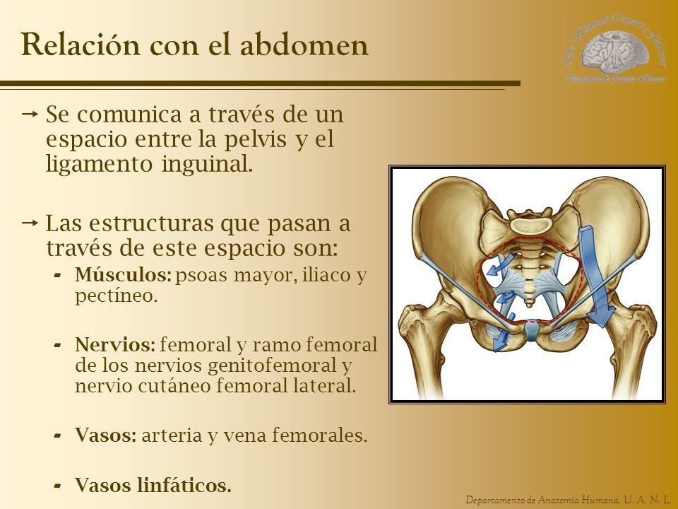 Relación con el abdomen