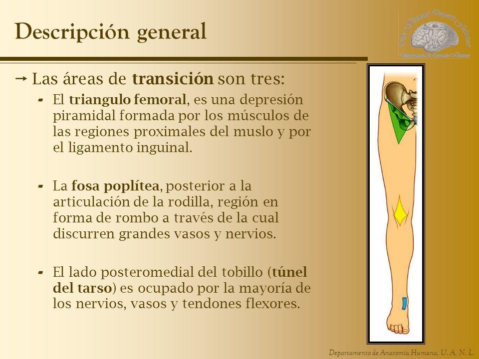 Descripción general Las áreas de transición son tres: