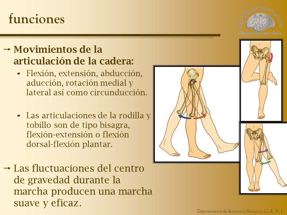 funciones Movimientos de la articulación de la cadera: