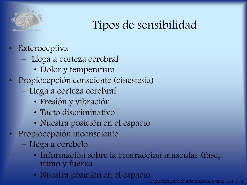 Tipos de sensibilidad Exteroceptiva Llega a corteza cerebral