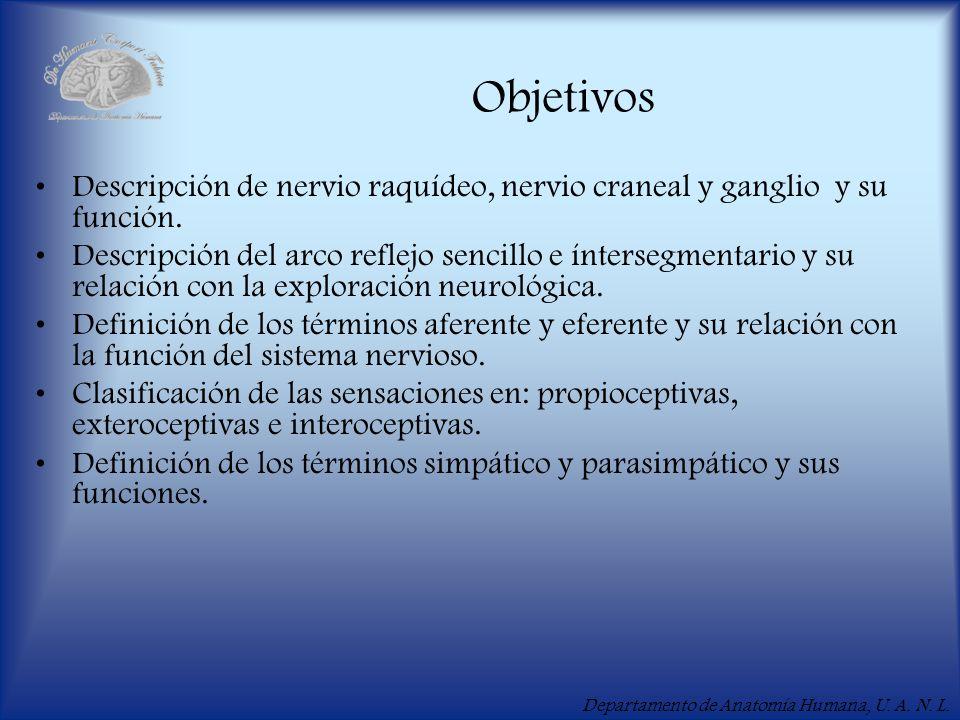 Objetivos Descripción de nervio raquídeo, nervio craneal y ganglio y su función.