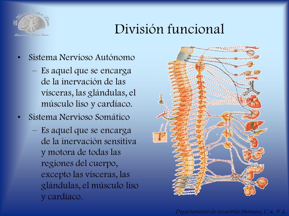 División funcional Sistema Nervioso Autónomo