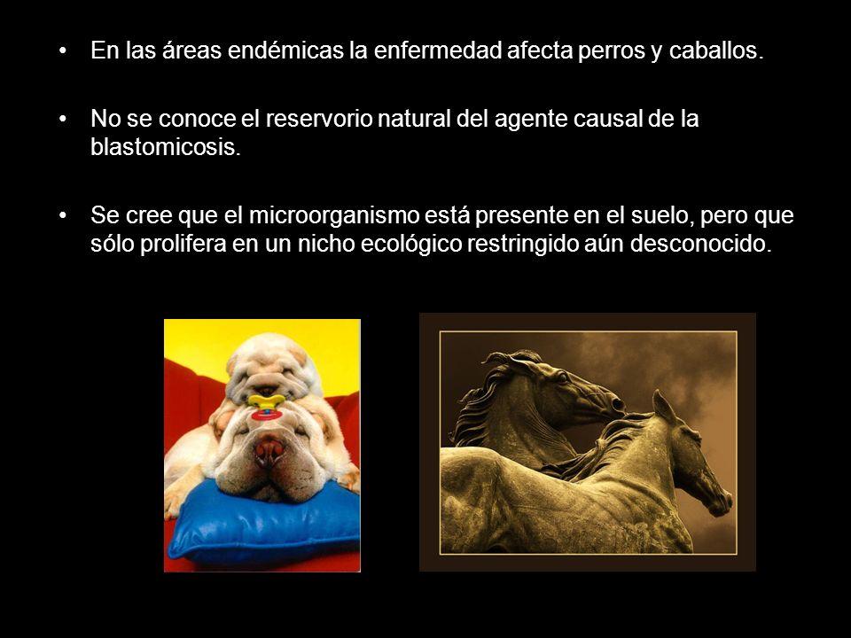 En las áreas endémicas la enfermedad afecta perros y caballos.