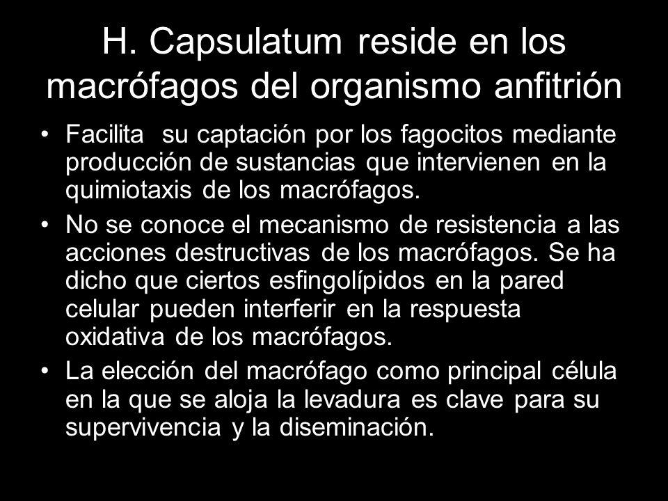 H. Capsulatum reside en los macrófagos del organismo anfitrión