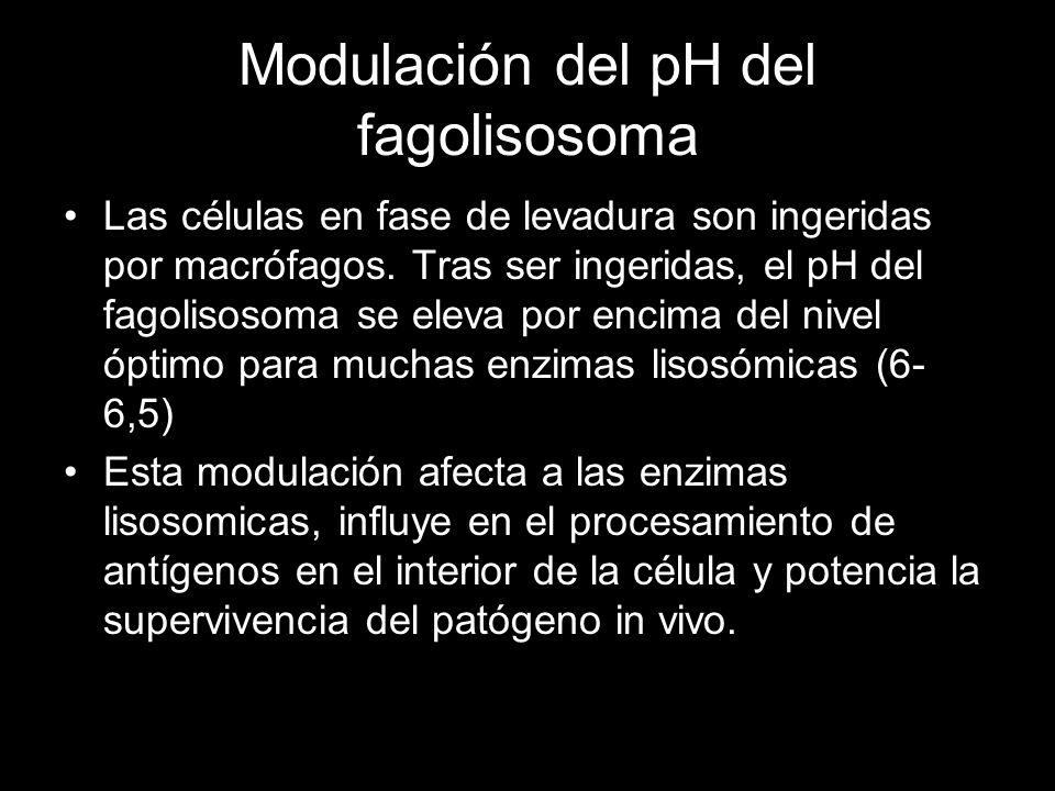 Modulación del pH del fagolisosoma