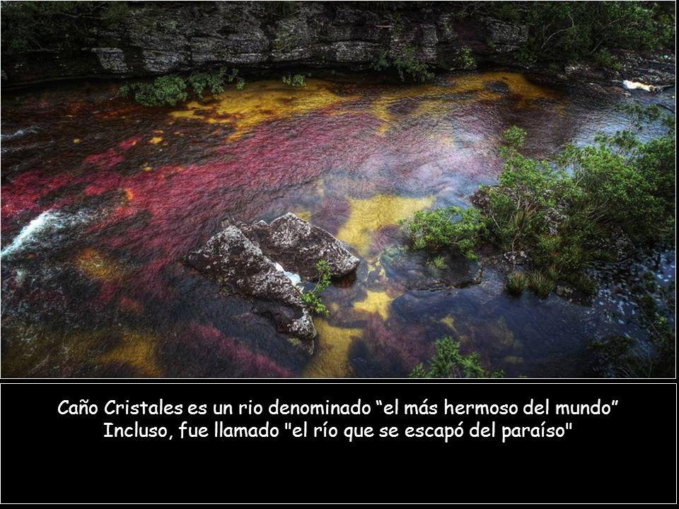 Caño Cristales es un rio denominado el más hermoso del mundo Incluso, fue llamado el río que se escapó del paraíso