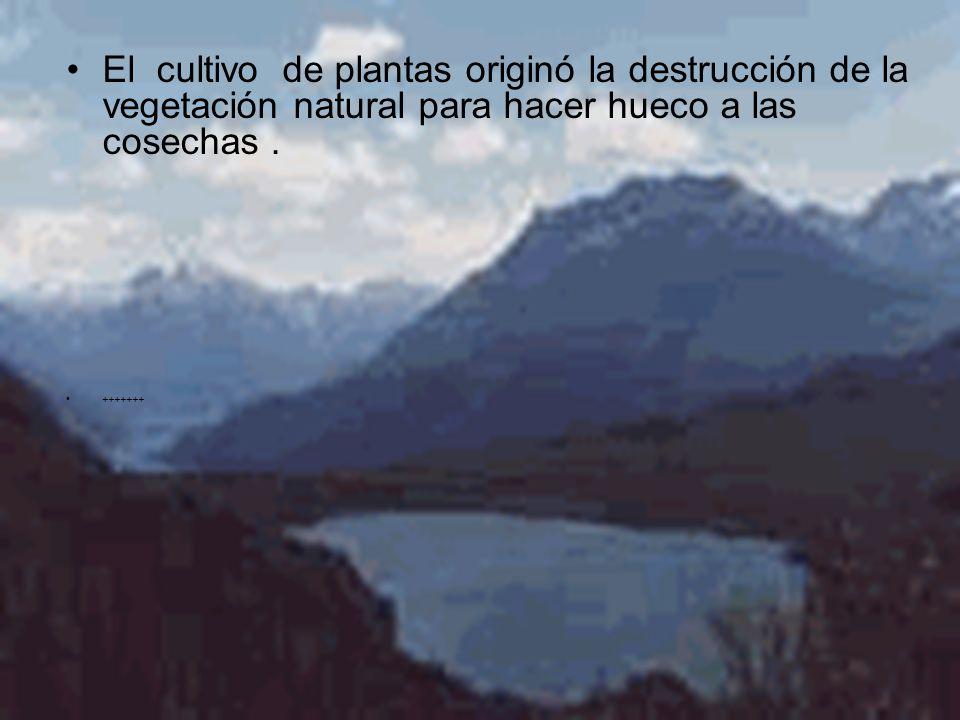 El cultivo de plantas originó la destrucción de la vegetación natural para hacer hueco a las cosechas .