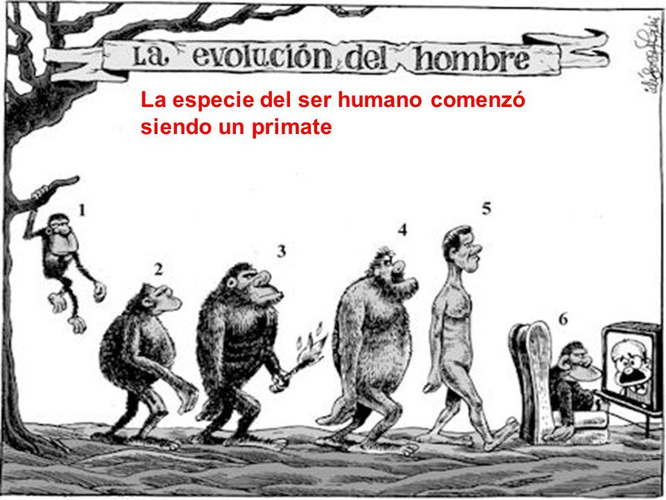La especie del ser humano comenzó siendo un primate