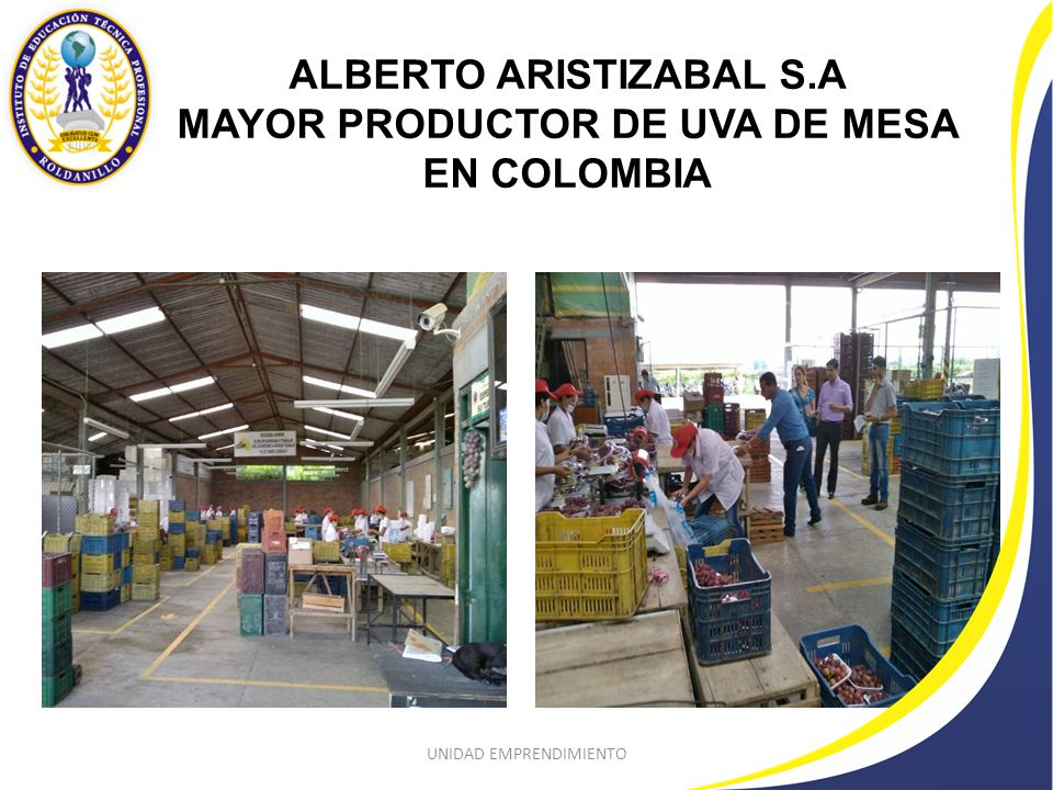 ALBERTO ARISTIZABAL S.A MAYOR PRODUCTOR DE UVA DE MESA EN COLOMBIA