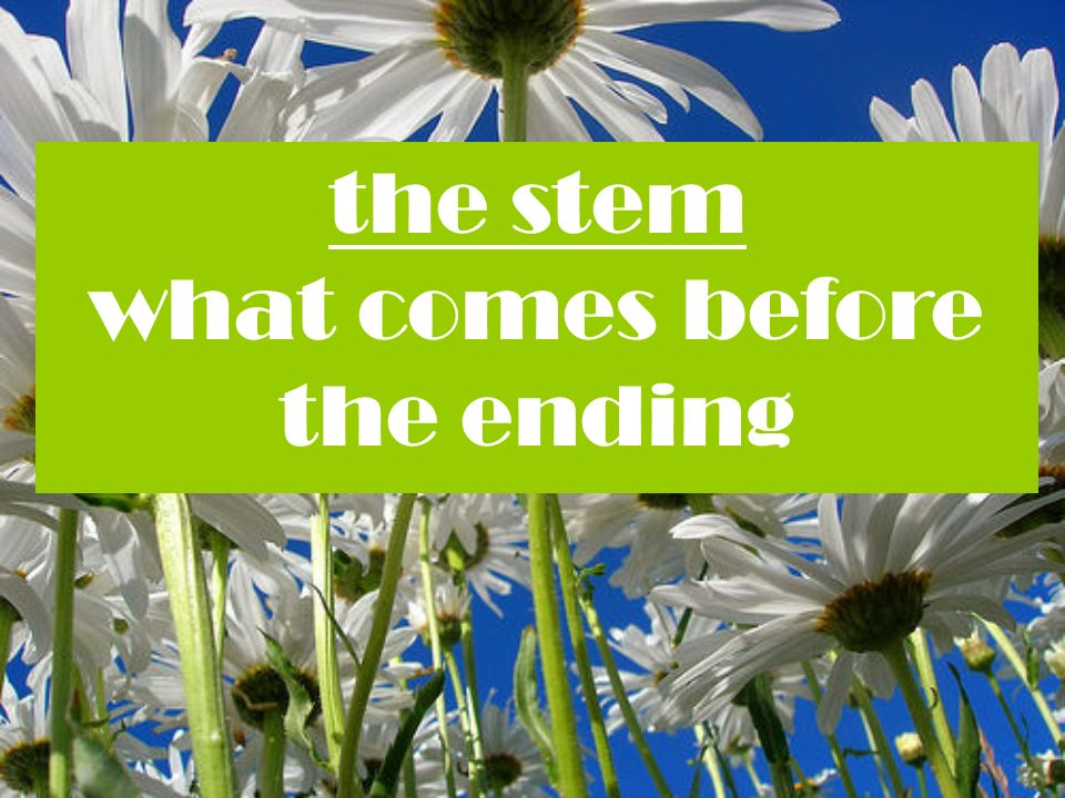 the stem what comes before the ending