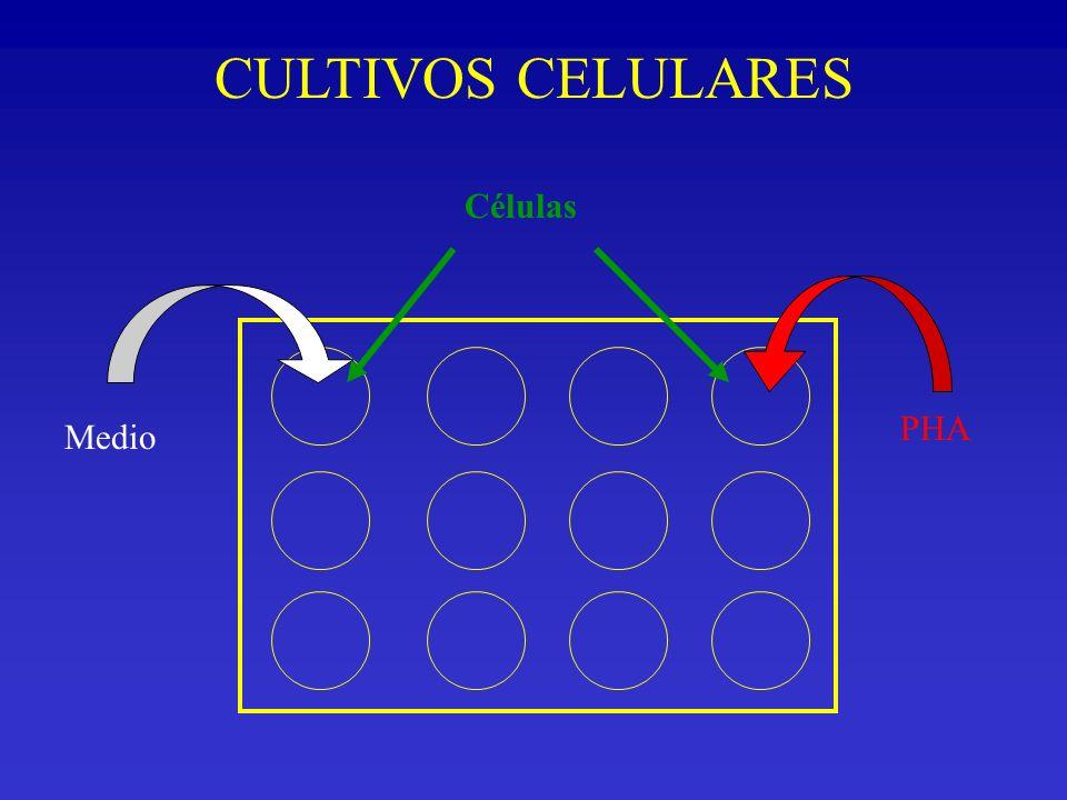 CULTIVOS CELULARES Células PHA Medio