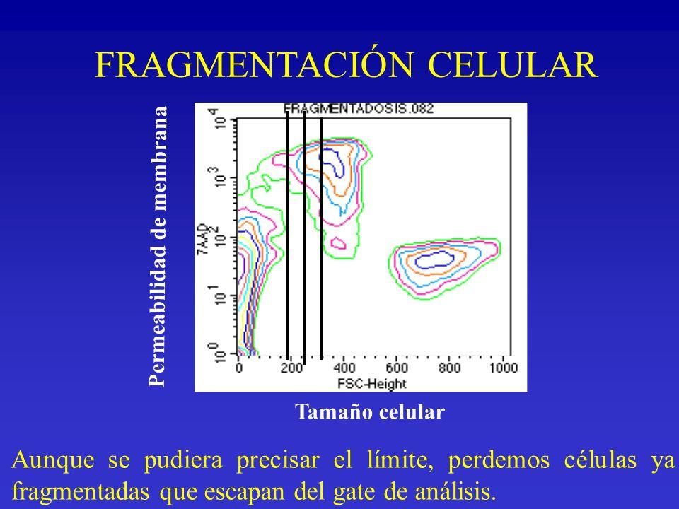 Permeabilidad de membrana