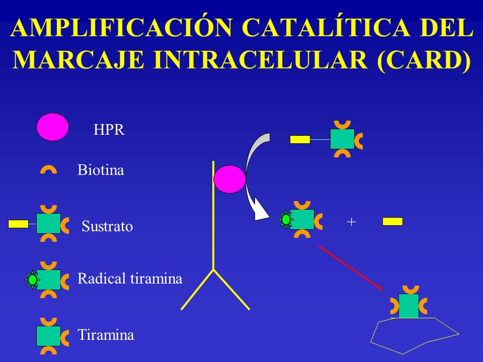 AMPLIFICACIÓN CATALÍTICA DEL MARCAJE INTRACELULAR (CARD)