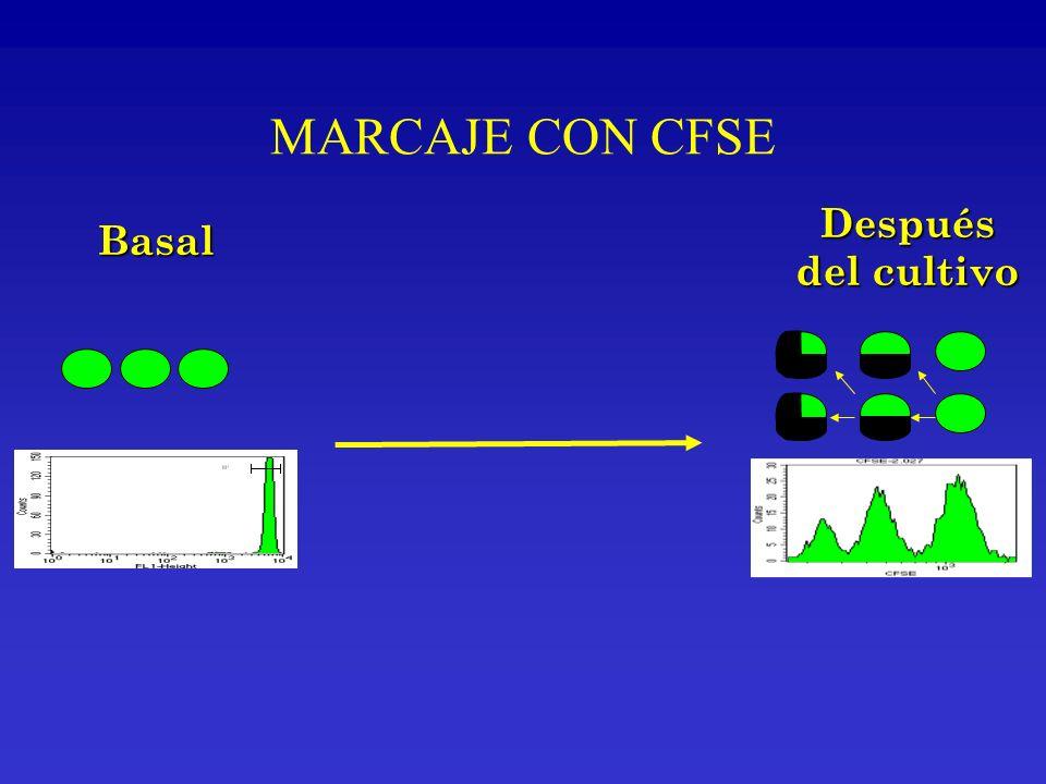 MARCAJE CON CFSE Después Basal del cultivo