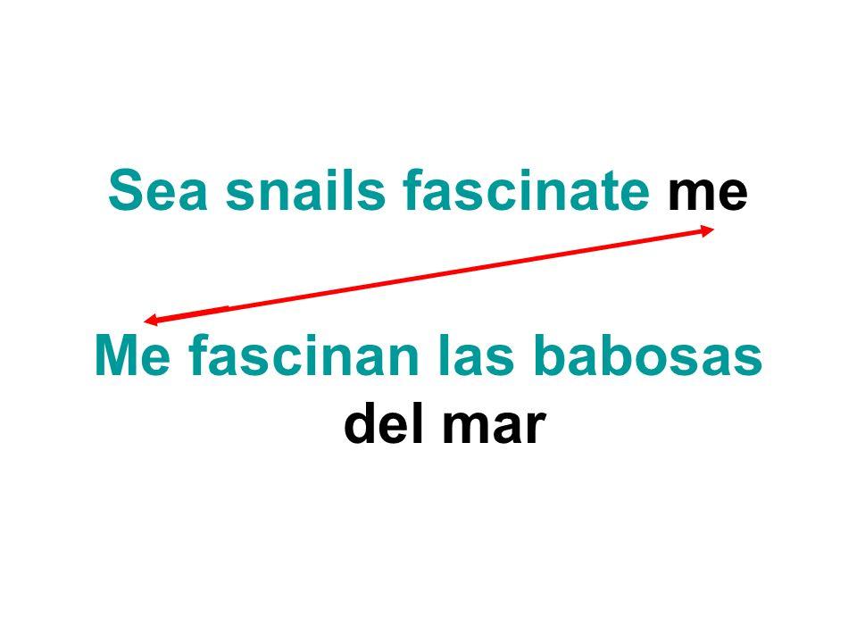 Sea snails fascinate me Me fascinan las babosas del mar