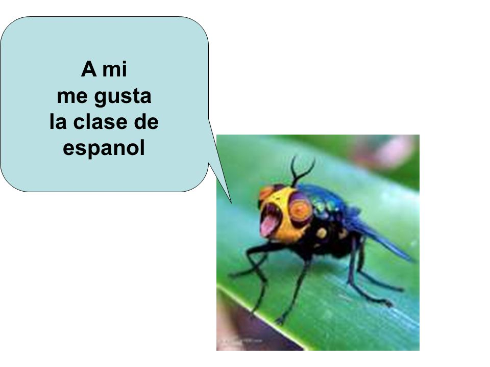 A mi me gusta la clase de espanol