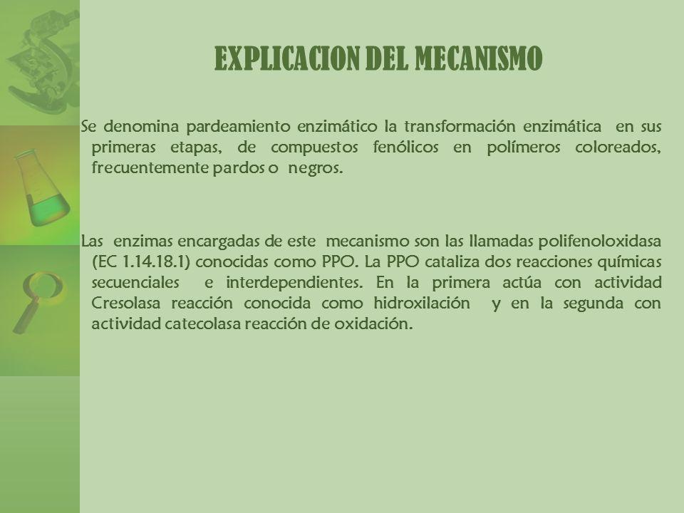 EXPLICACION DEL MECANISMO
