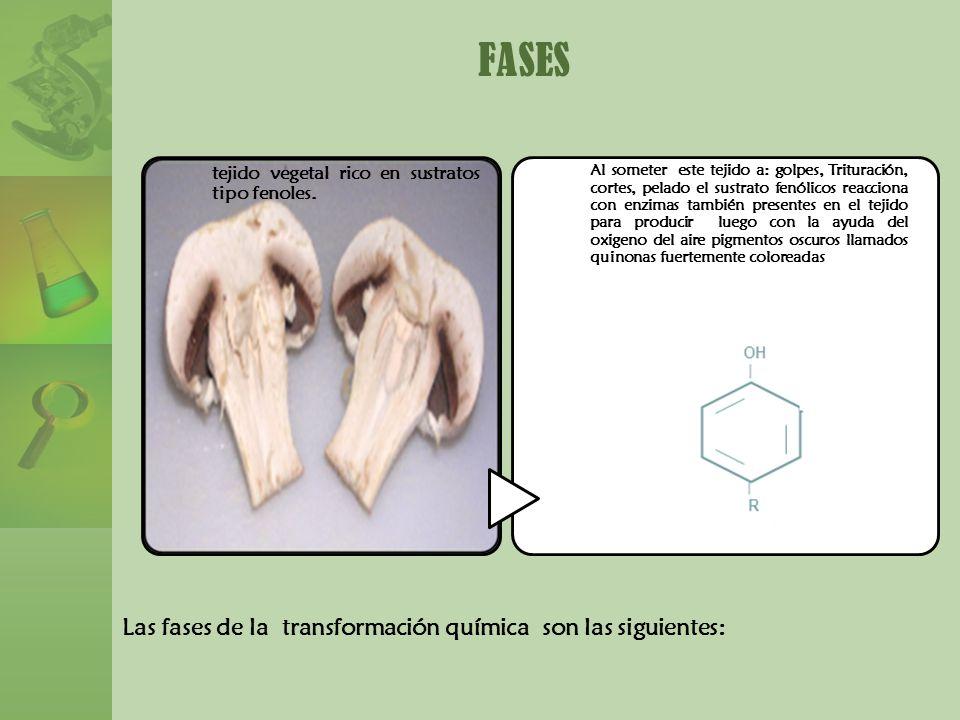 FASES Las fases de la transformación química son las siguientes: